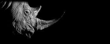 Nashorn von EK Photography