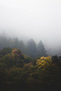 Herfstbos gewikkeld in mist van Patrik Lovrin