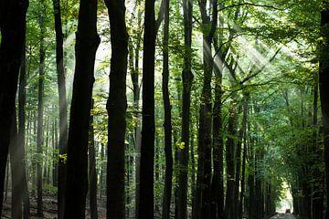 Majestätischer Wald mit Sonnenstrahlen durch die Bäume von Dorota Talady