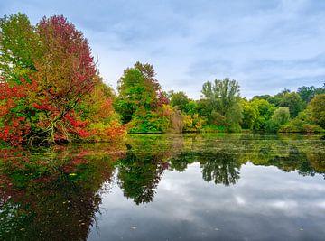 Forêt d'automne près de l'eau