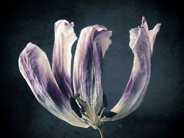 Vergangene Schönheit von Andreas Berheide Photography