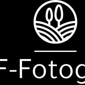 BTF Fotografie avatar