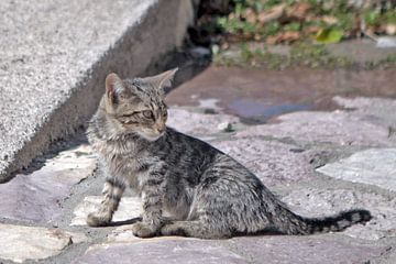 Katzenbaby von t.ART