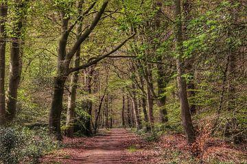 Spaziergang in den Wäldern. von Harma Kroeze-Raterink