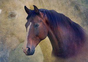 Paarden portret van deinFarbentanz