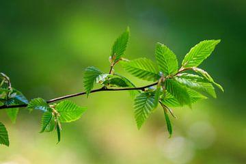 Grüne Blätter van