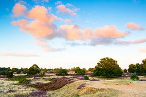 Heideveld met wolkenlucht van