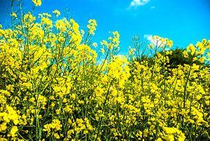 geel 2