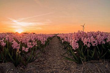 Hyacinten in Breezand van Arjanne Gols