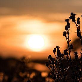 Natuur in Rottum van Jouke Wijnstra Fotografie