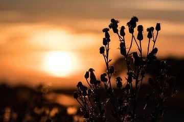 Natur in Rottum von Jouke Wijnstra Fotografie