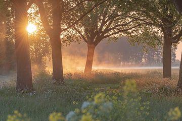 atmosphärischer Sonnenaufgang von Tania Perneel