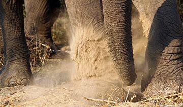 Olifanten poten van Marieke Funke