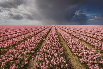Blumenfeld von Thijs Friederich