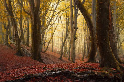 Herfst bomen in het Speulderbos van