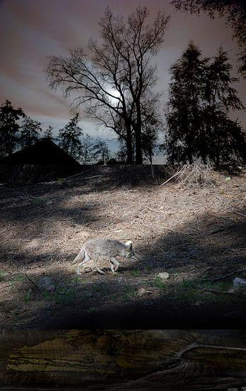 Wolf - nacht van Hannie Kassenaar