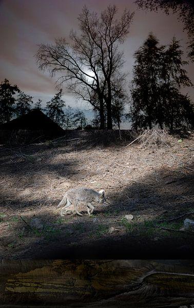 Wolf - Nacht von Hannie Kassenaar