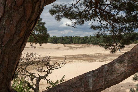Kootwijker Zand