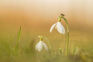 Voorjaarswarmte van Sander Meertins