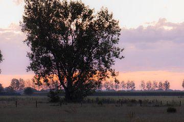 boom bij dageraad van