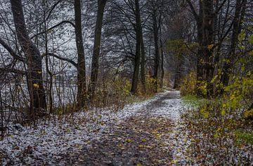 Chemin enneigé à travers une allée d'arbres par un jour d'hiver froid et sombre. sur Alex Winter