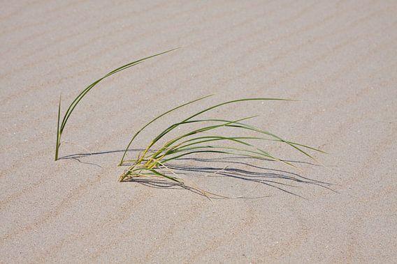 Texels strand gras van Guido Akster