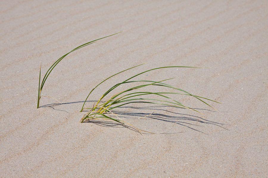Texels strand gras