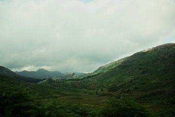 Groen landschap van
