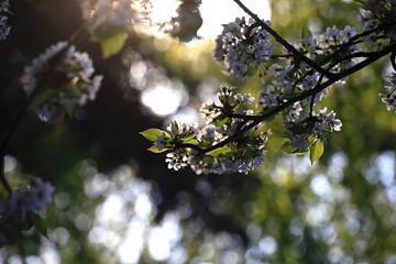 Frühling von Thomas Jäger
