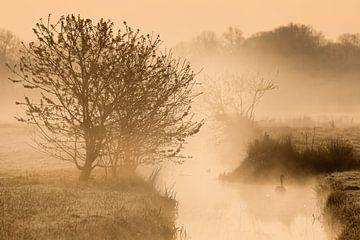 Ein Schwan im Nebel