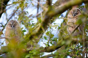 Bosuiltjes in de boom