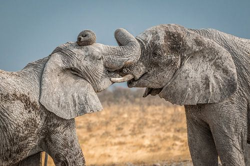 Kuscheln Elefanten Namibia von Eefke Smets