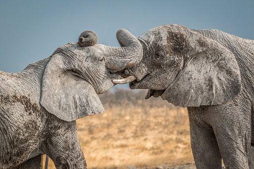 Knuffelende olifanten Namibie van Eefke Smets