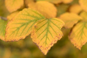 Herfstbladeren in geel - groene kleuren van Marianne Twijnstra-Gerrits