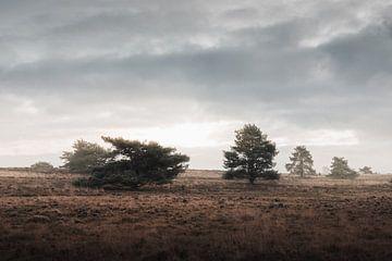 Ein geheimnisvoller Nachmittag   Die Veluwe-Heidelandschaft von Nanda van der Eijk