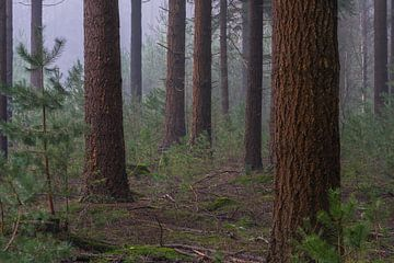 Bomen in de mist van zeilstrafotografie.nl