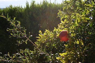 Granaatappel in de zon van Floortje Mink