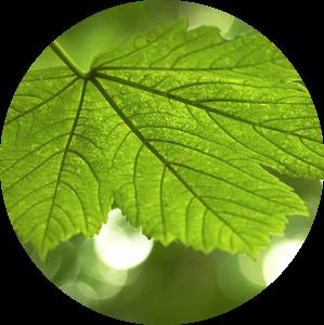 Green Leaf van Bob Bleeker