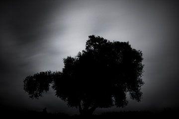 Silhouette eines Baumes von Martijn van den Enk