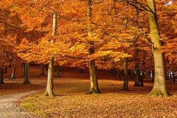 Herbst von Heinz Grates