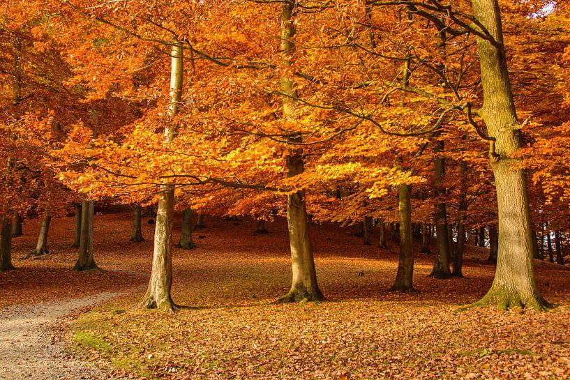 autumn van Heinz Grates