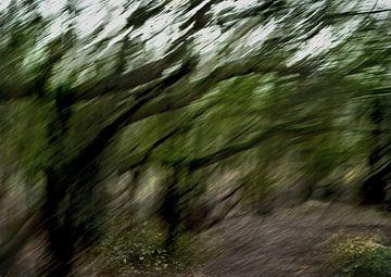 Wind 2 van Lein Kaland