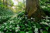 Savelsbos in de lente van Marijn Heuts thumbnail