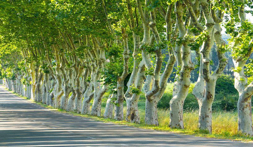 1965  Dancing plane trees van Adrien Hendrickx