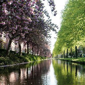Voorjaarsbomen in Holland van Ineke Huizing
