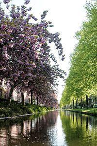 Voorjaarsbomen in Holland van