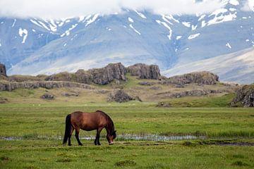 Icelandic horse von Ab Wubben