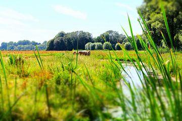 Paarden in de Biesbosch van Marian Klerx