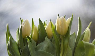 Frisse witte tulpen, fresh white tulips van J..M de Jong-Jansen
