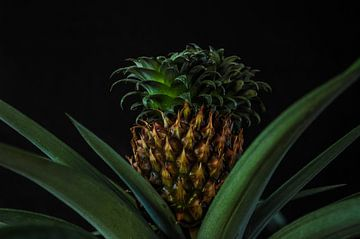 Ananaspflanze (2) von Rob Burgwal